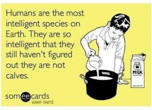 reasons to stop eating dairy #vegan www.plantpoweredkitchen.com