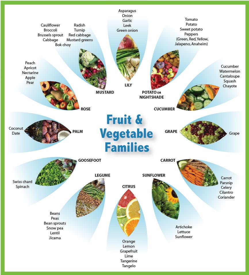 fruitandvegetablefamilies